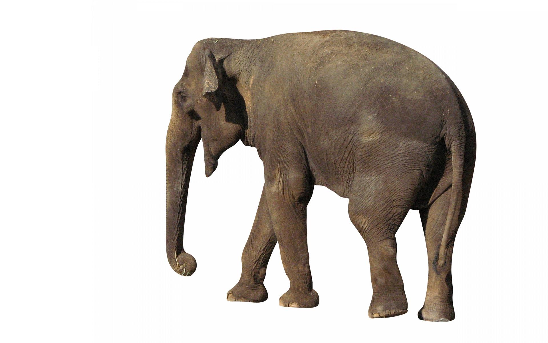 elephant-3275